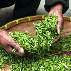 umfangreiche Auswahl und bestmögliche Qualität, stetig wachsendes und vielfältiges Tee-Portfolio
