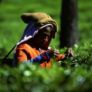 Leidenschaft und Begeisterung für Tee sowie die fundierten Marktkenntnisse,