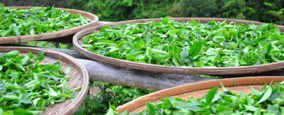 Unser Sortiment umfasst eine Vielzahl an hochqualitativen, erlesenen Tees aus ausgewählten Teegärten, darunter viele orthodoxe Tees, Blends und Mischungen - aromatisiert und nicht-aromatisiert.