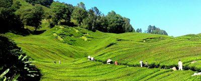 Wir haben hier für Sie eine Übersicht/Glossar/Lexikon zu Teeanbaugebieten und Ursprungsländern, Teesorten, Wissenswertes und Besonderheiten, Qualitäten und Produkten. Diese Sammlung erweitern wir regelmäßig.