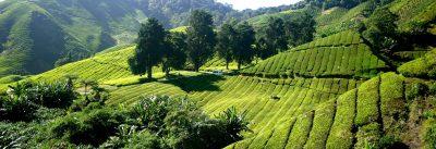 Erlesene Tee-Spezialitäten im nationalen und internationalen B2B-Geschäft